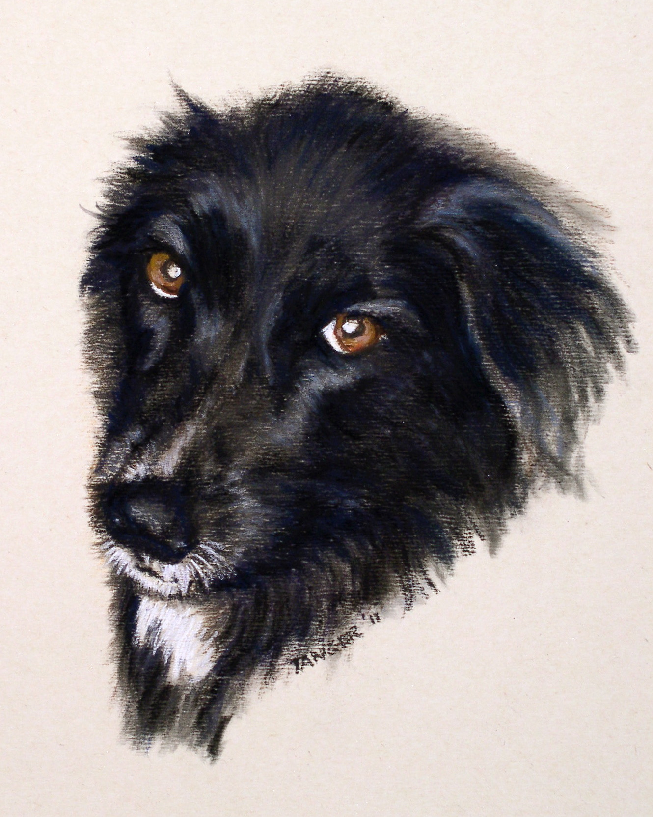 sweet face of a black dog with white chin in pastel