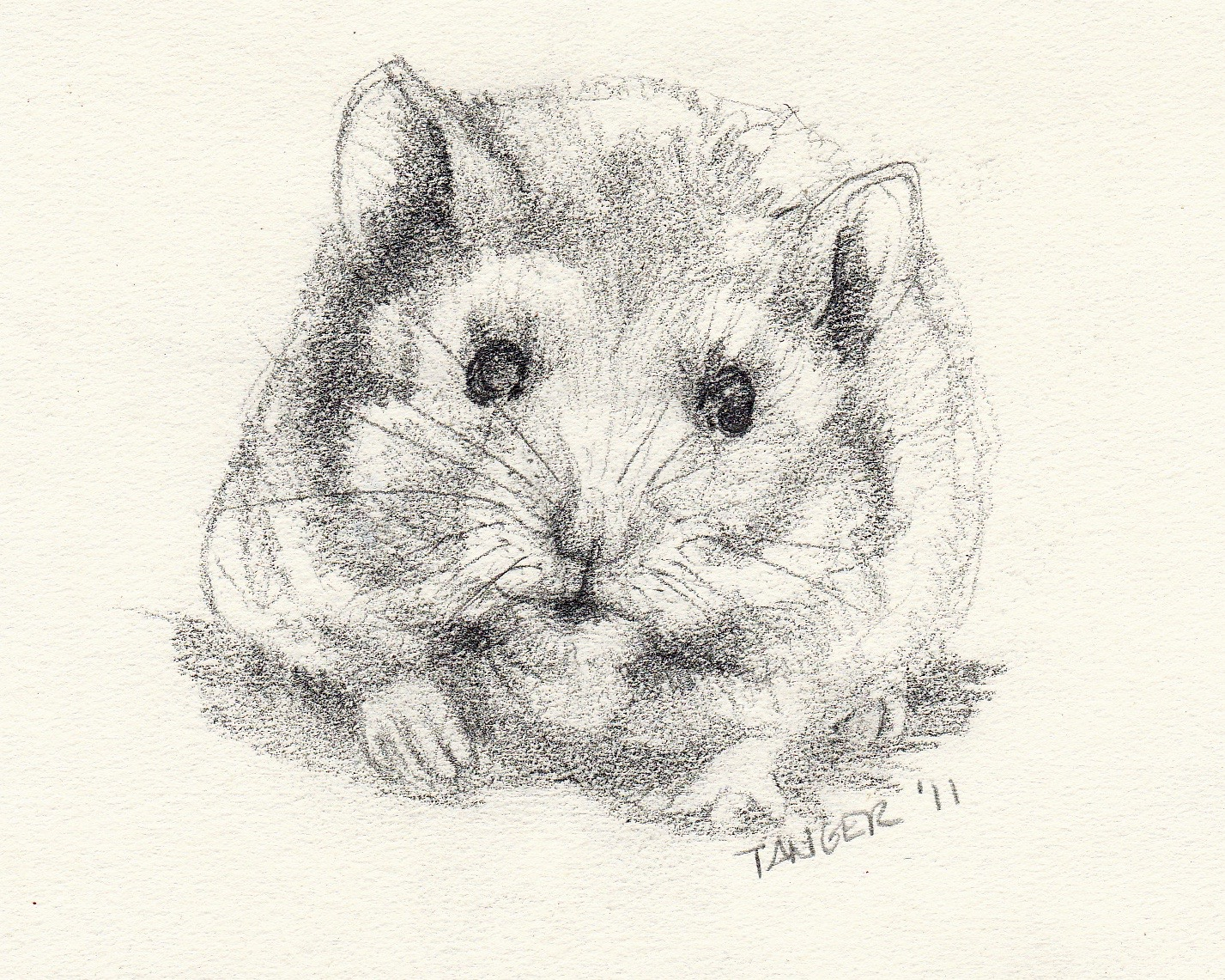 pencil sketch of crouching hamster