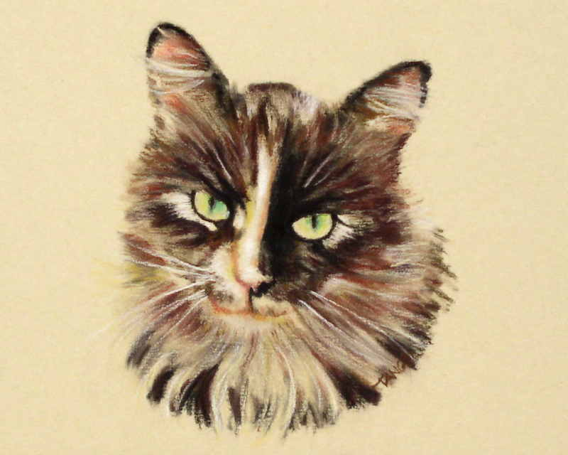 pastel portrait of calico cat with many colors