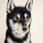 portrait on textured paper in pastel of shiba inu