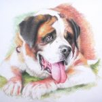 pet portrait of St. Bernard dog with tongue out on a hot summer day