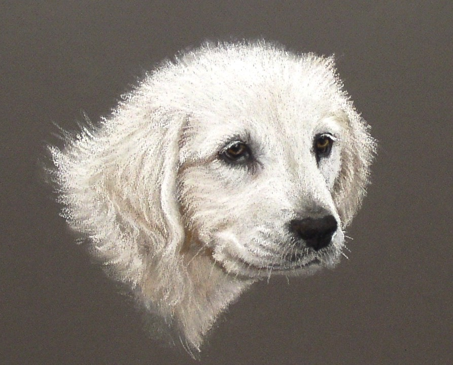 pet portrait of white lab in pastel on brown background from photo of dog as a puppy