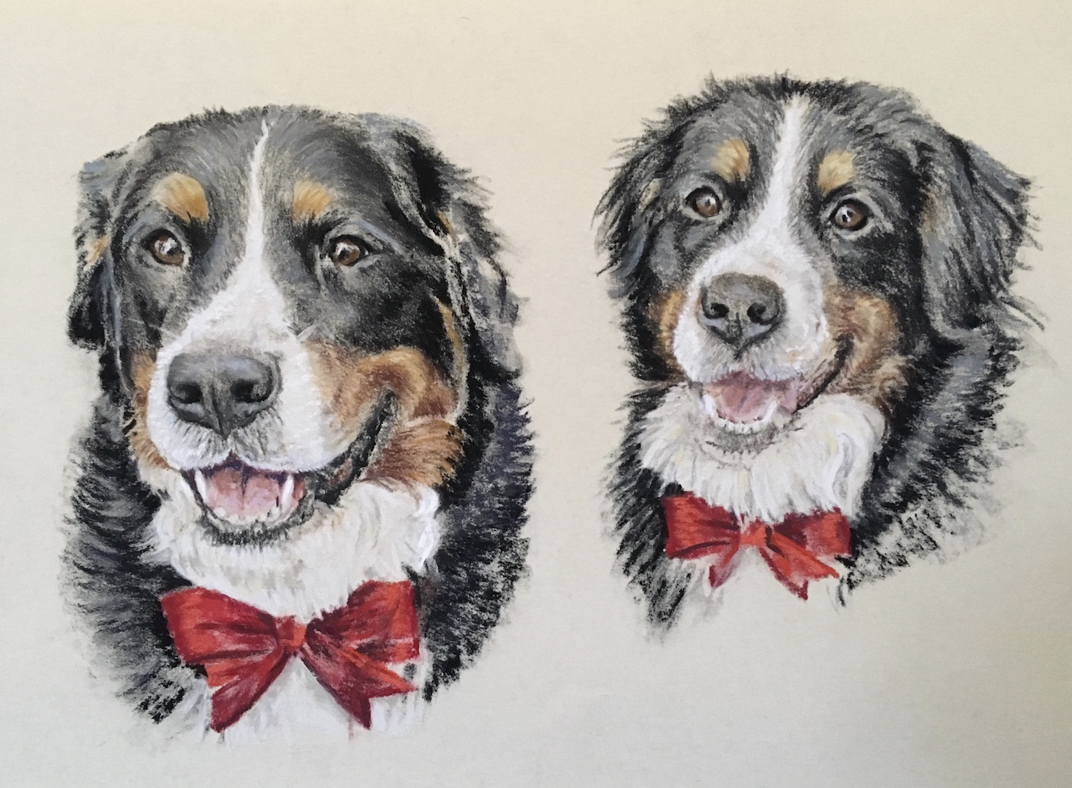 pastel portrait of two Bernese Mountain dogs together
