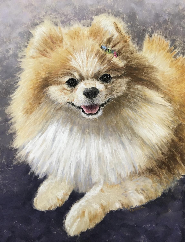 Pomeranian-pastel-Tanger