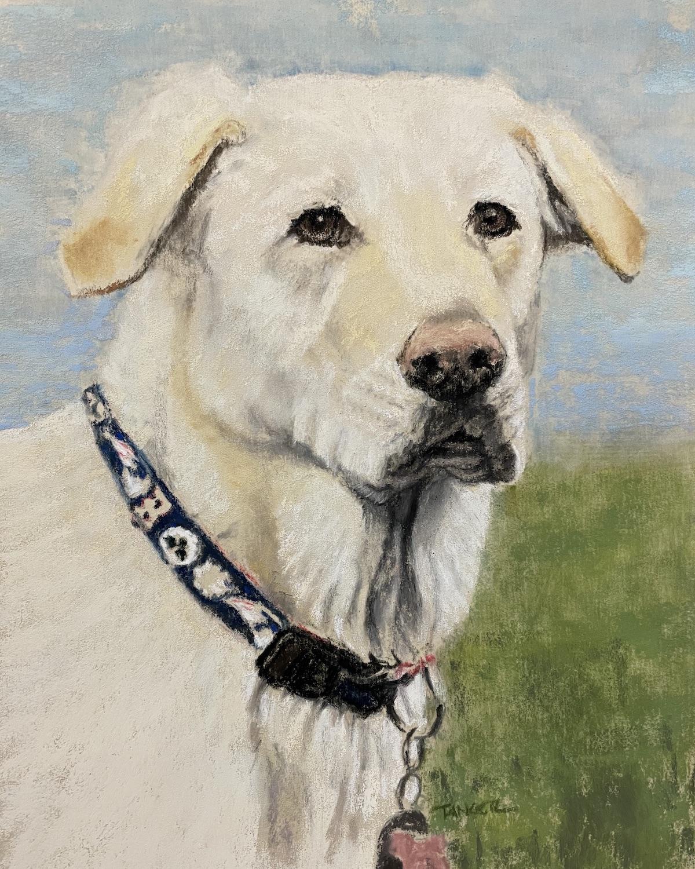 white labrador retriever-pastel-Tanger